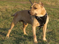 Agitation/Protection Leather Dog Harness- Pit bull