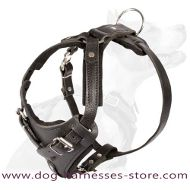 Siberian Husky walking Leather Dog Harness- handmade harness