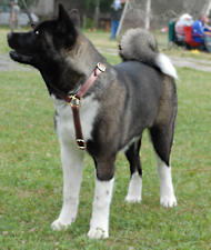 Akita dog harness, Siberian Husky harness for walking/training/tracking