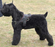 black russian terrier nylon dog harness