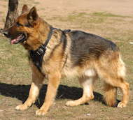 german shepherd dog harness