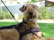 Gear leather dog harness walking dog harness