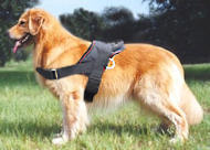 Nylon dog harness for Golden Retriever harness