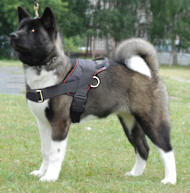 Nylon dog harness for Akita Inu/Siberian Husky with handle for walking/tracking