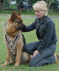 Best Leather dog harness for German Shepherd