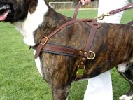 dog harness for pulling
