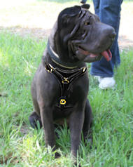 tracking/walking dog harness for Shar-Pei dog breed