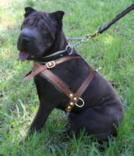 tracking pulling dog harness for Sharpei click here!