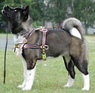 Tracking /pulling dog harness for Akita Inu/Siberian Husky/Japanese Akita/sibe