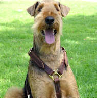 leather dog harness for airedale terrier