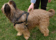 tracking dog harness for briard