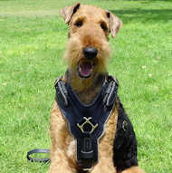 Exclusive Luxury Handcrafted Padded Leather Dog Harness-Airedale