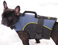 French bulldog harness for walking, tracking-French bulld ogcoat