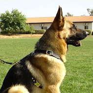 tracking pulling dog harness dor german shepherd