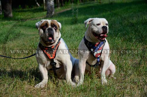 Quality Dog Harness Comfortable for Working Breeds' Training