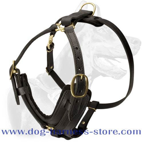 Quality Training/Walking Dog Harness of Luxurious Shape with Brass Fittings