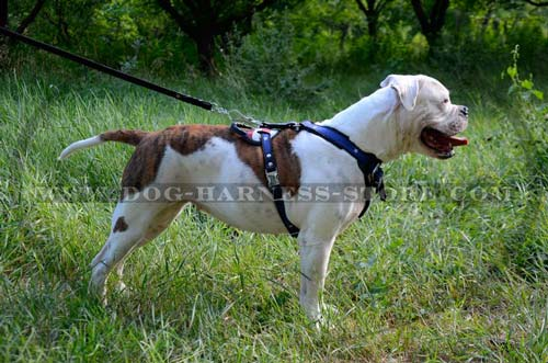 Heavy Duty Dog Harness with Wide Chest Plate and Wide Straps for Training