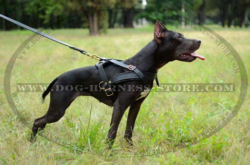 Comfortable Leather Harness with Solid Brass Fittings