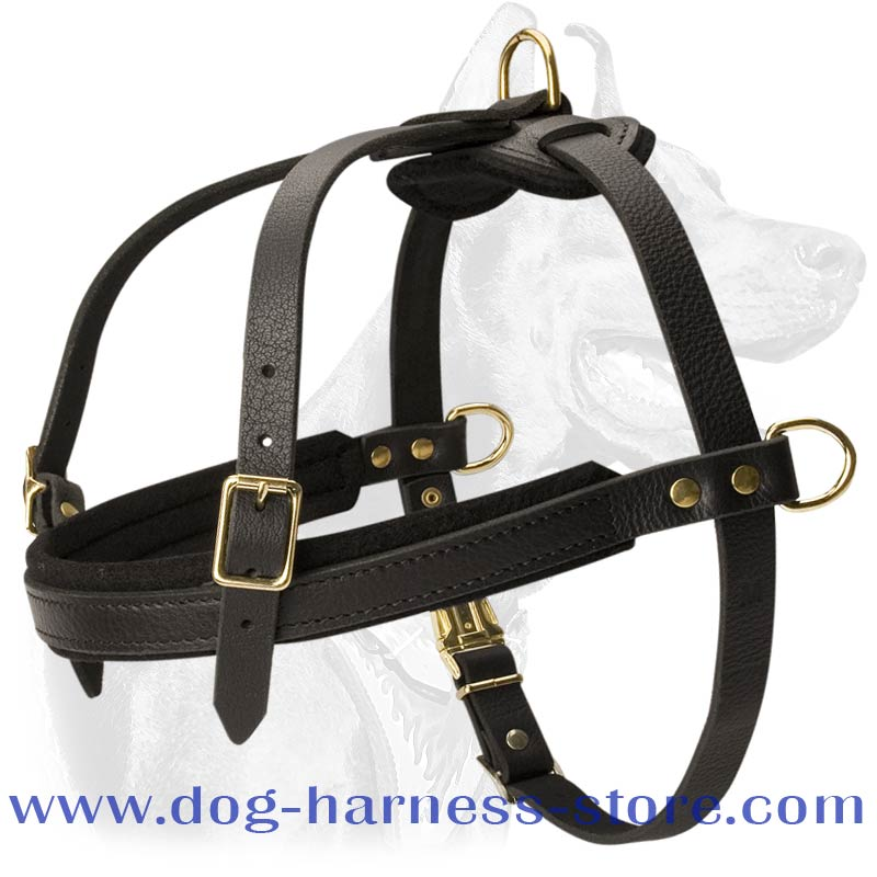 Husky Dog Clipart Husky Dog Harness