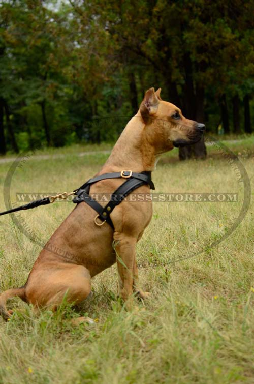 Dog Harness for Different Breeds Created to Withstand Challenges of Pulling and Tracking Work