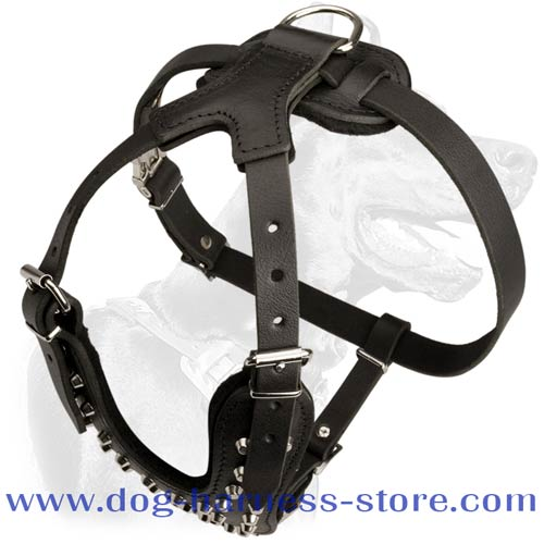 Fashionable Dog Walking Harness Made of Full Grain Leather with Silver Color Pyramids