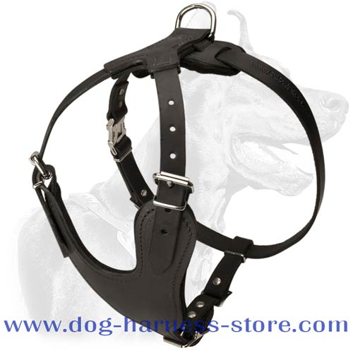 Leather Training Harness with Y-Shaped Chest Plate
