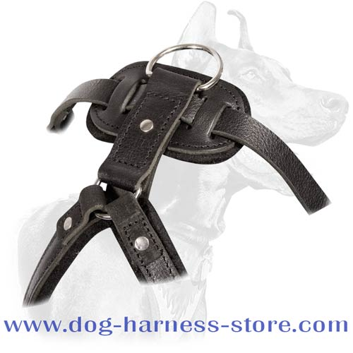 Dog Harness of Solid Leather for Agitation/Protection Training with Wide Padded Chest Plate
