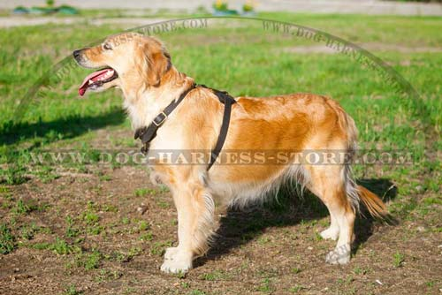 Tracking/Walking Light Weight Harness Very Comfortable for Active Breeds