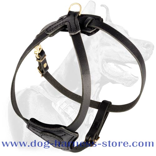 Comfortable Harness for Tracking and Walking Small Dogs