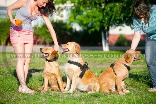 Quality Nylon Dog Harness for Use on Different Terrains