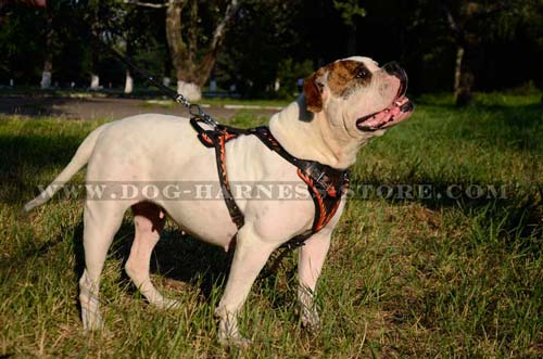 Durable Dog Harness with Comfortable Wide Chest Plate Lined with Thick Felt