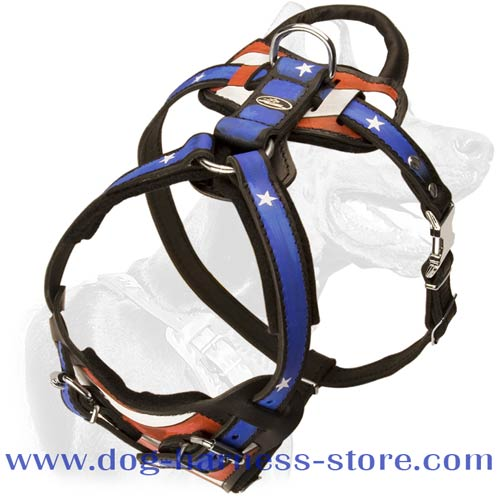 Leather Dog Harness for Training and Walking with Unrepeatable Hand Set Pattern