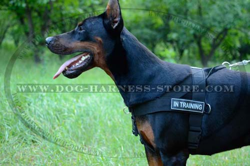 Doberman Working Nylon Harness with Side Rings for load attachment