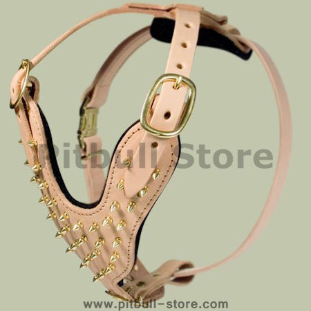 Padded spiked leather dog harness with brass spikes