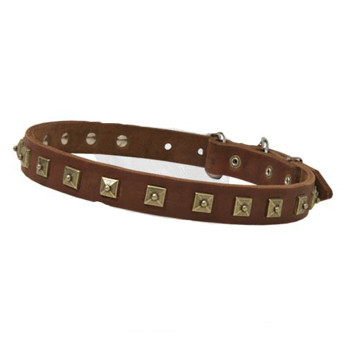 Leather decorated dog collar with attractive brass studs