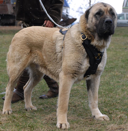walking dog harness dor dog walking,tracking