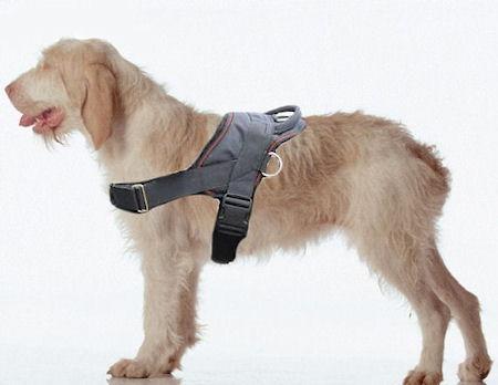 Spinone Italiano nylon dog harness with handle