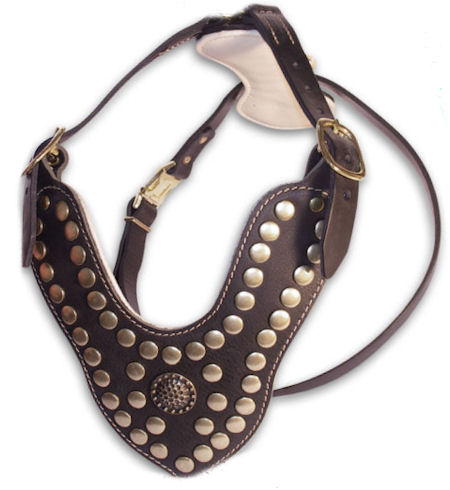 leather padded dog harness with royal studs