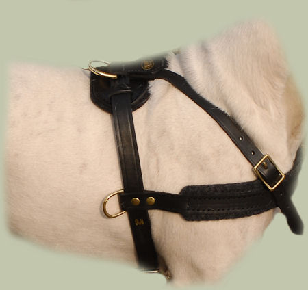 Quick Control Leather dog Harness for English Bull Terrier-H5