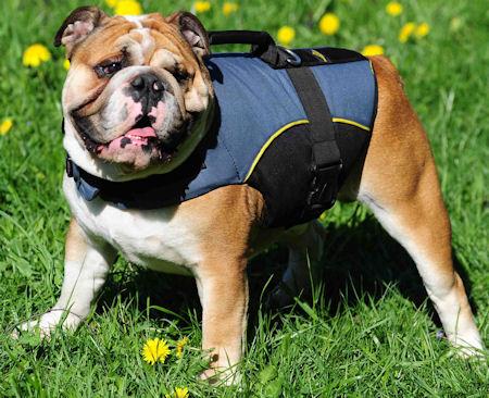 Dog Vest for Bulldog -British Bulldog Dog Coat /Dog Jacket