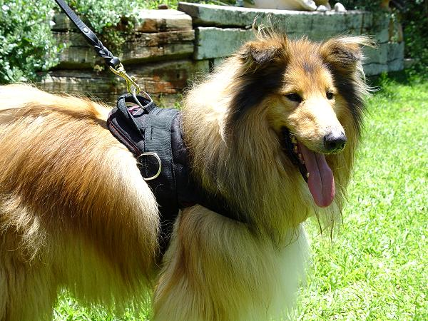 Tracking Nylon multi-purpose dog harness with handle