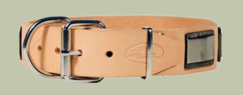 leather dog collar with big plates German golden retriever