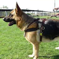 tracking pulling dog harness schutzhund training
