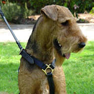 airedale terrier dog harness for walking