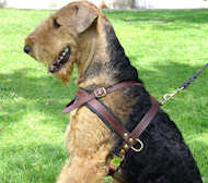 Tracking/Pulling Leather Dog Harness Airedale Terrier