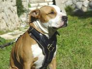 amstaff leather dog harness add handle