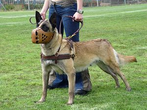 dog training harness for belgian malinois