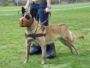 dog training harness for belgian malinois