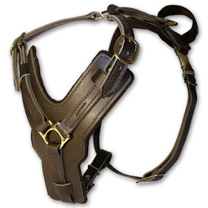 leather dog harness for Weimaraner breed