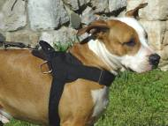nylon dog harness for amstaff
